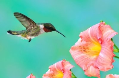 SEO and hummingbird